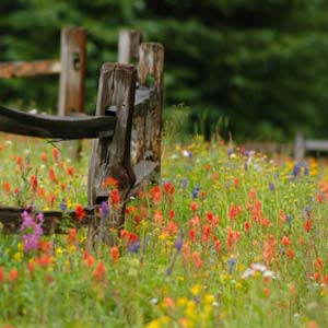 basics-of-planting-a-prairie-garden0