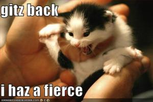 funny-pictures-kitten-is-sort-of-fierce1