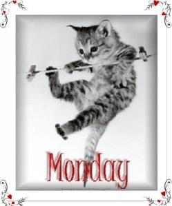 MondayCat-1