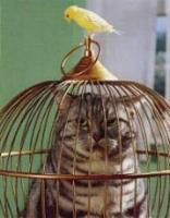 caged cat